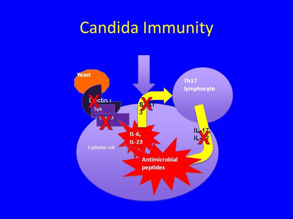 X Candida Immunity X X X Yeast Th17 lymphocyte Dectin-1 STAT3