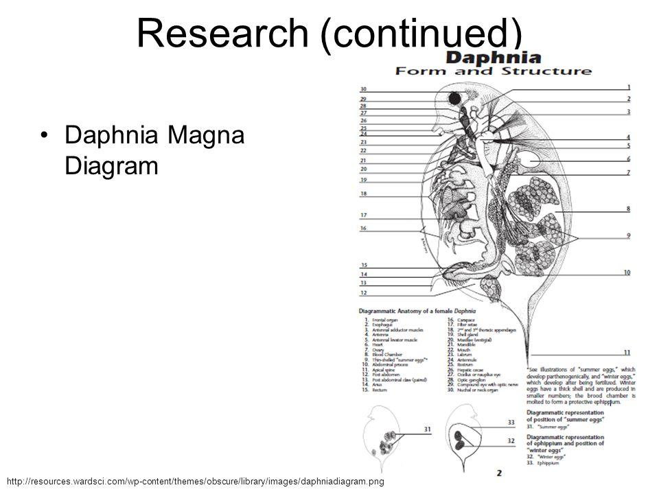 Erfreut Daphnia Magna Anatomie Fotos - Menschliche Anatomie Bilder ...