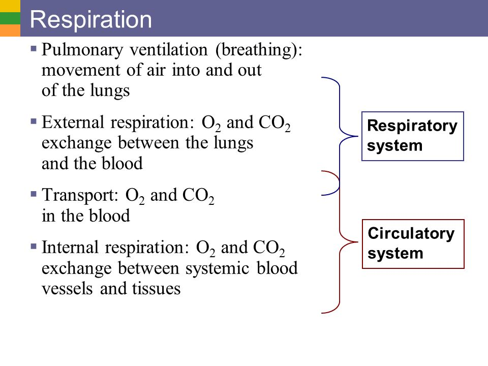 pulmonary ventilation or breathing essay Essays respiratory  mismatch between lung ventilation and blood flow through the blood vessels of the lung c rationale: pulmonary fibrosis causes the alveolar .