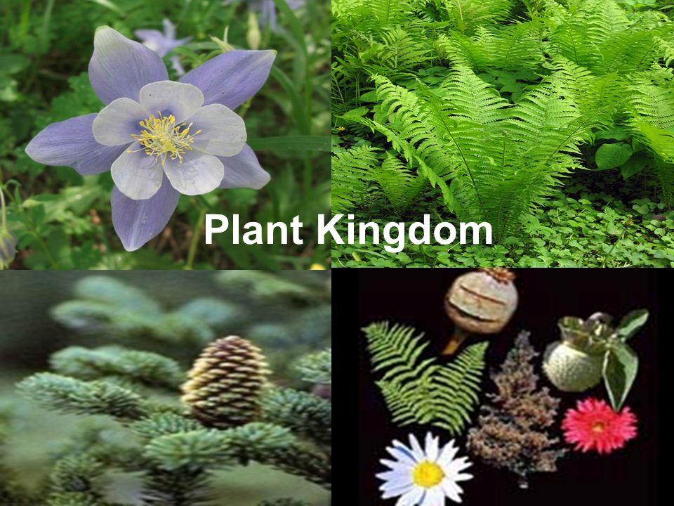 Plant Kingdom Ppt Video Online Download