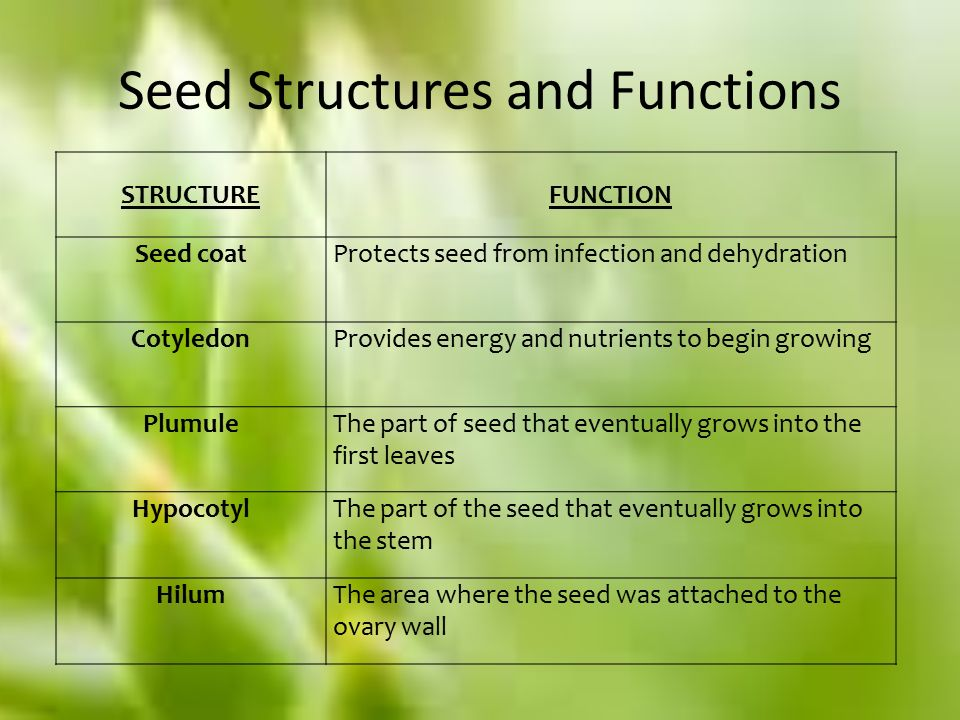 ficus seed structure diagram seed structure and function diagram structure and function - ppt video online download