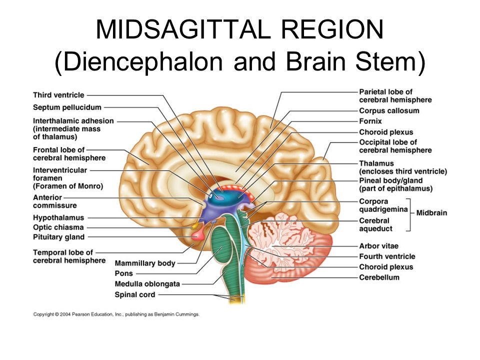 APIINotes2 20spermatogenesis moreover Patient Education besides Opening The Third Eye Via Witchcraft Sorcery And Magic as well The Nervous System likewise Bone Cell Labeled Diagram Diagram Template Category Page 1117 Cleanri. on endocrine system brain diagram