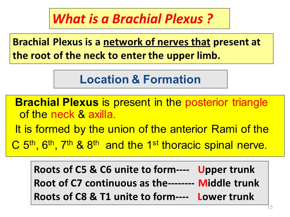 brachial plexus in hindi