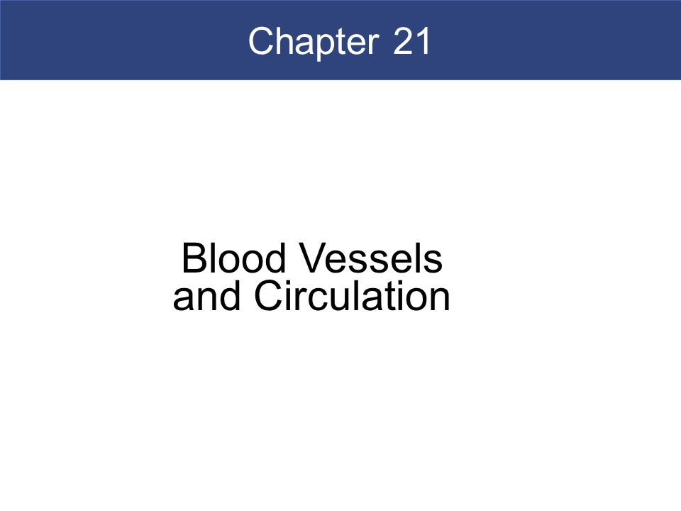Blood Vessels and Circulation - ppt video online download
