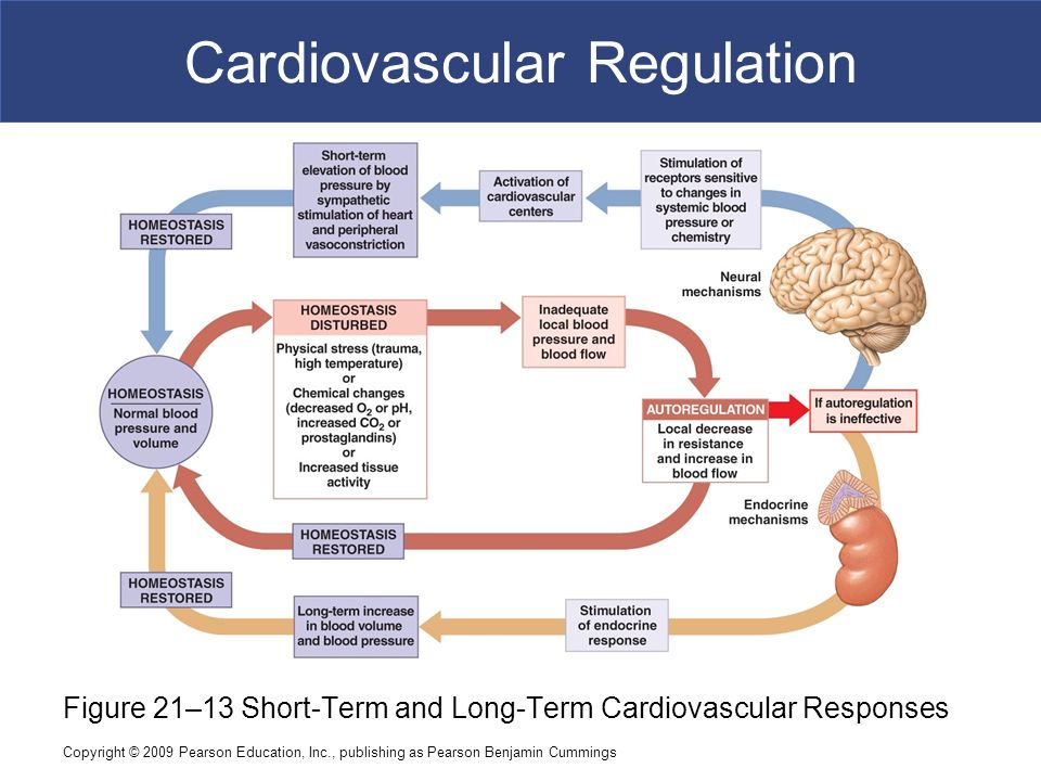 exercise 5 cardiovascular dynamics answers Free essay: exercise 5 cardiovascular dynamics o b j e c t i v e s 1 to understand the relationships among blood flow answers to ch 5 textbook exercises essay.