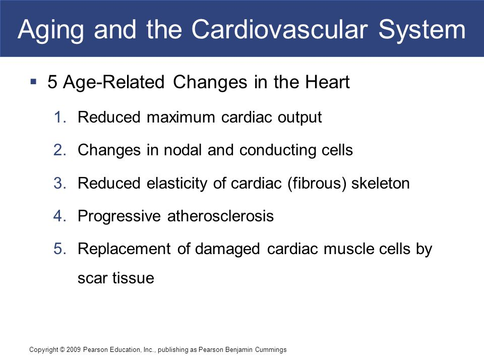 age related changes in the cardiovascular December 2008/january 2009 • arnnetwork 3 gerontology update a review of cardiovascular changes in the older adult pamala larsen, phd rn crrn fngna the number of older adults in the united.