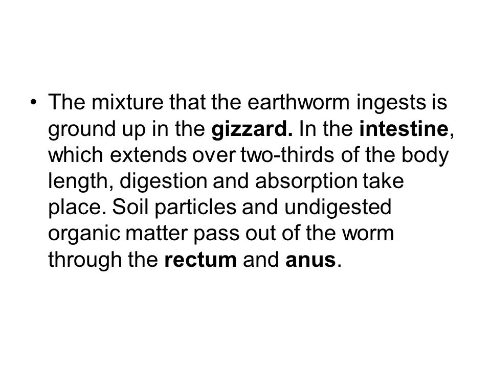 The mixture that the earthworm ingests is ground up in the gizzard