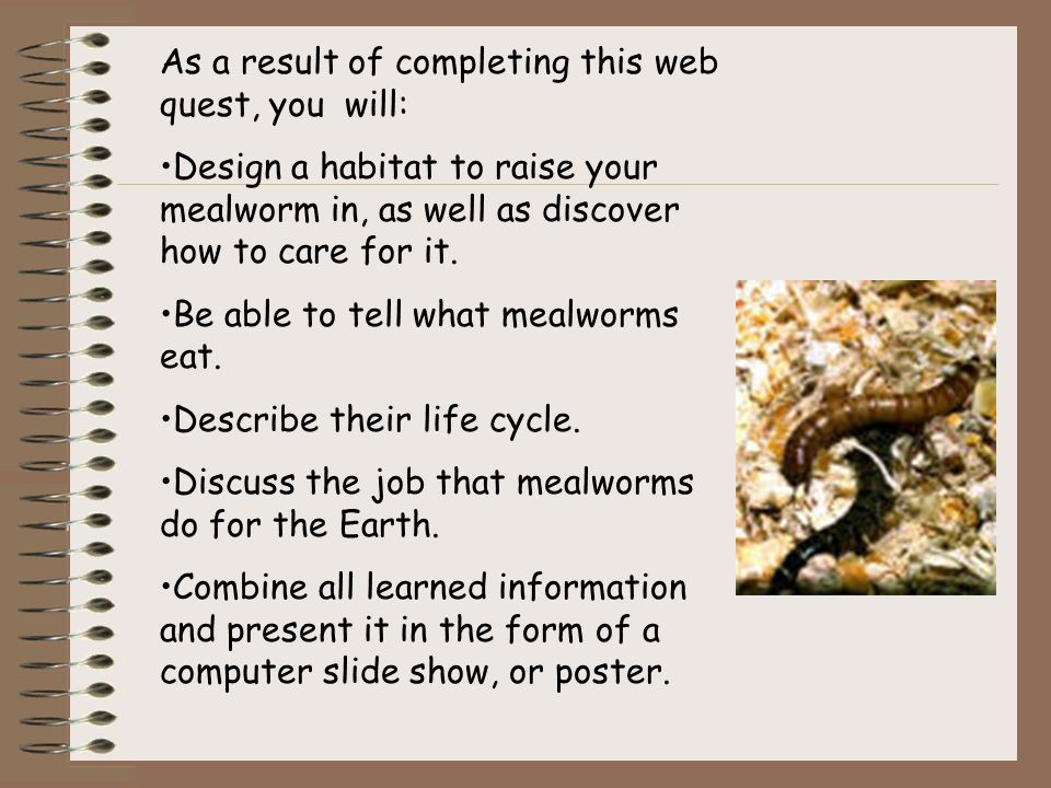 how to raise your own mealworms