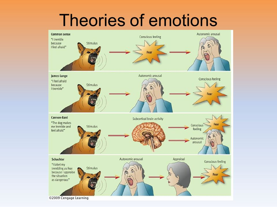 four theories of emotion Chapter 13 motivation and emotion section 1: the psychology of motivation section 2: biological needs: question: what are the four theories of motivation.