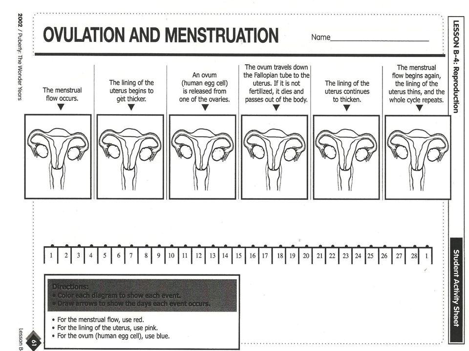 Puberty The Wonder Years ppt video online download – Menstrual Cycle Worksheet