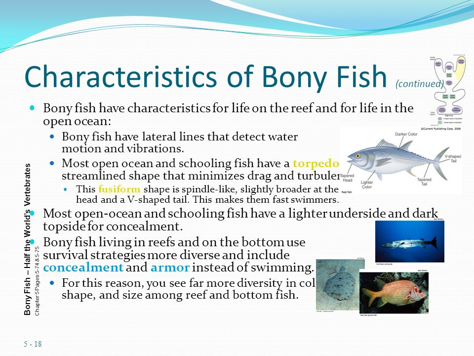 chapter 8 marine fish ppt video online download