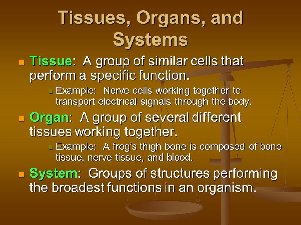 Group Of Tissues That Perform A Specific Function 56
