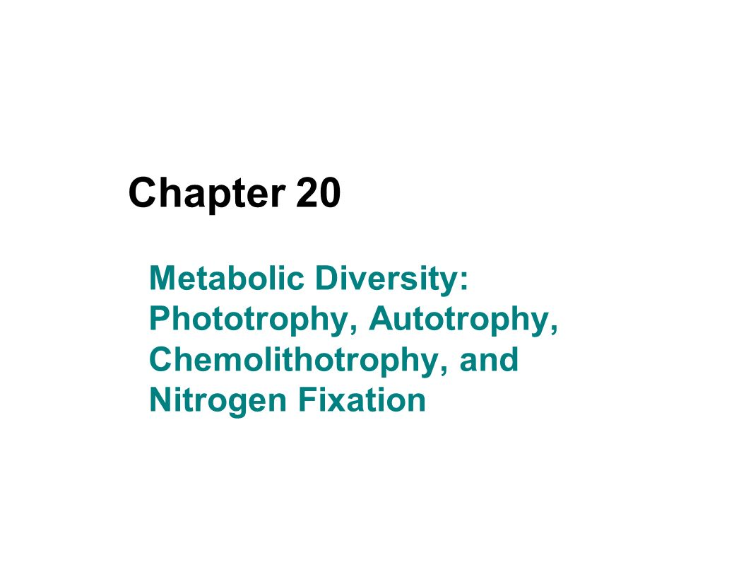 autotrophy and phototrophy Chemoorganotrophy phototrophy chemolithotrophy autotrophy all of the above i'm going over an exam and am trying to see how many i got wrong.