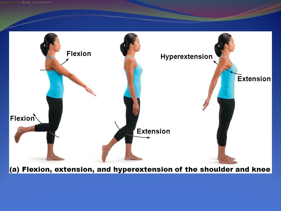 Hyperextension Movement Images - Reverse Search