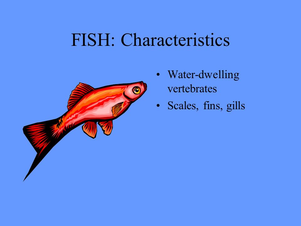 Vertebrates ppt video online download for List of fish with fins and scales
