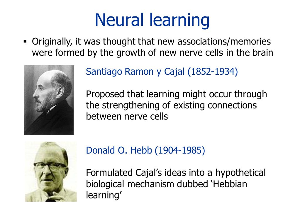 Neural learningOriginally, it was thought that new associations/memories were formed by the growth of new nerve cells in the brain.