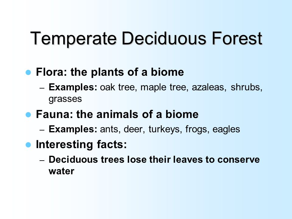 temperate deciduous biome paper Biomes c temperate forest: dense forest with thin, broad, deciduous leaves or rainforests typically dominated by conifers tall trees with single boles creating deep shade understories often sparse typical plants include maples, oaks, elms (deciduous) spruce or auraucaria (rainforest) typical animals include deer and squirrels.
