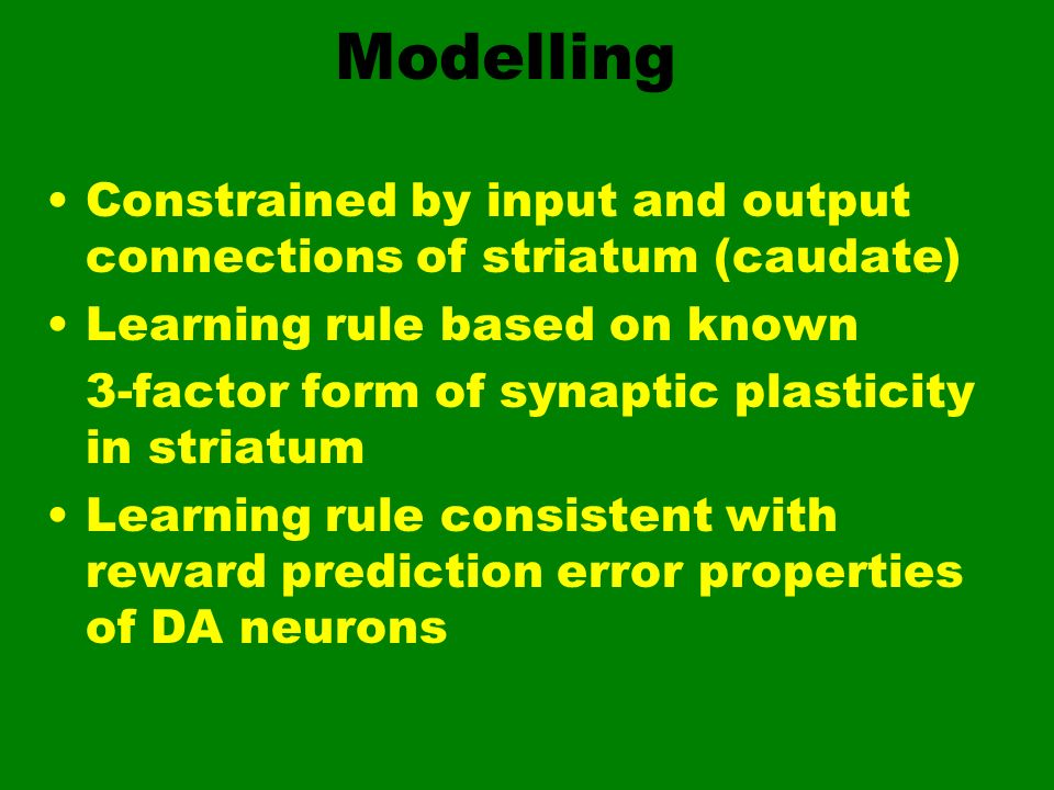 ModellingConstrained by input and output connections of striatum (caudate) Learning rule based on known.