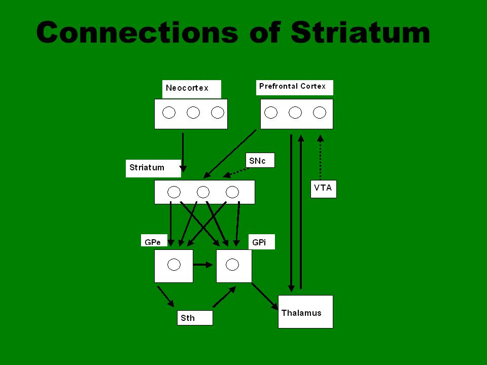 Connections of Striatum