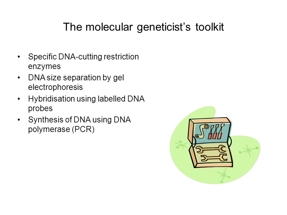 The molecular geneticist's toolkit
