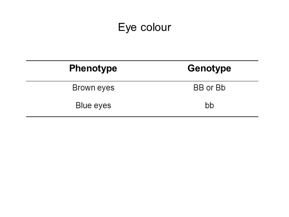 Eye colour Phenotype Genotype Brown eyes BB or Bb Blue eyes bb