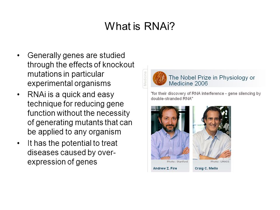 What is RNAi Generally genes are studied through the effects of knockout mutations in particular experimental organisms.