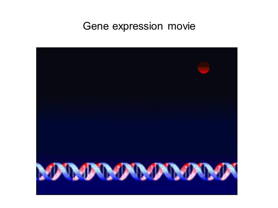 Gene expression movie