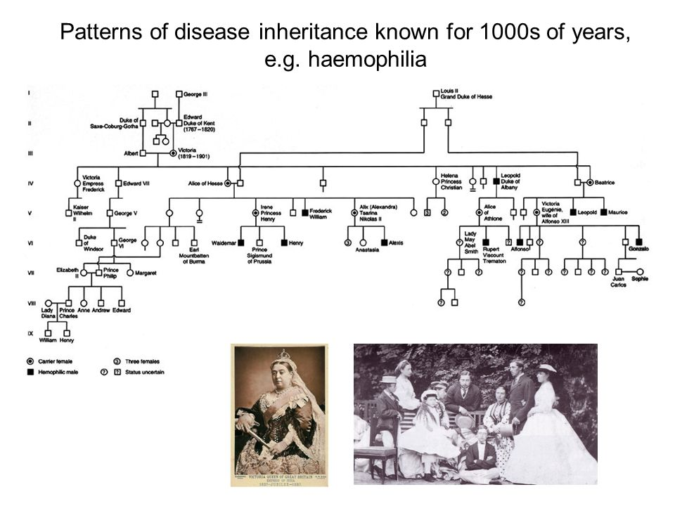 Patterns of disease inheritance known for 1000s of years, e. g