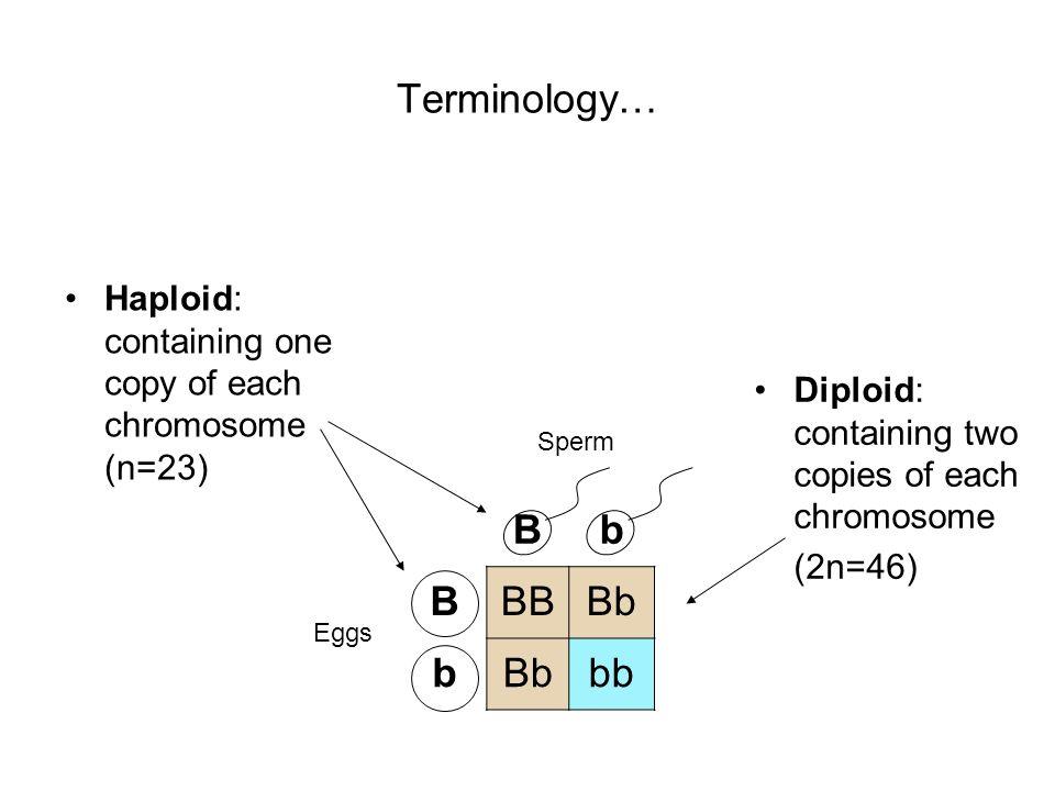 Terminology… B b BB Bb bb