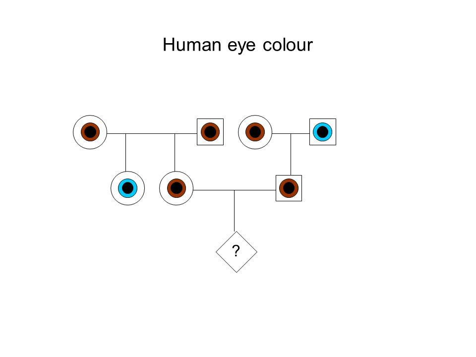 Human eye colour