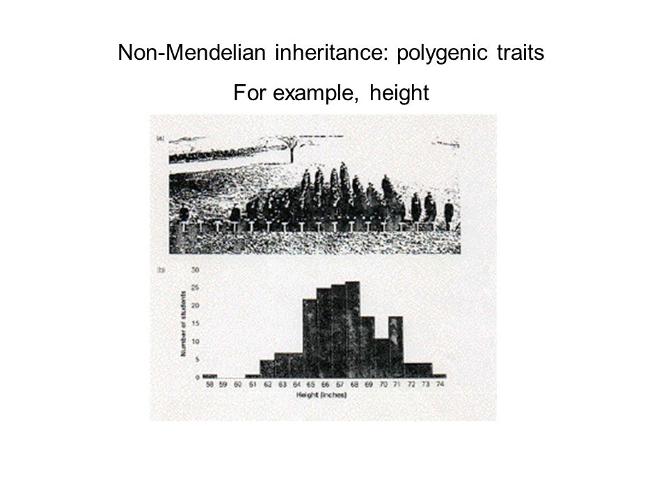 Non-Mendelian inheritance: polygenic traits