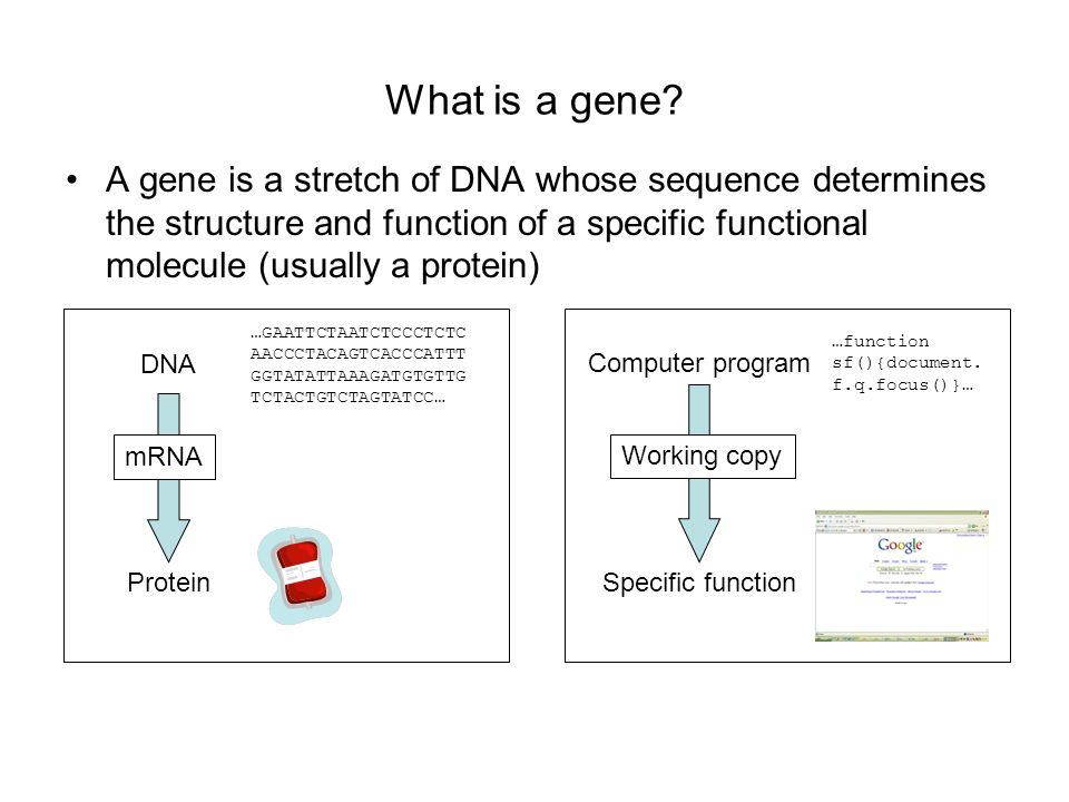 What is a gene A gene is a stretch of DNA whose sequence determines the structure and function of a specific functional molecule (usually a protein)