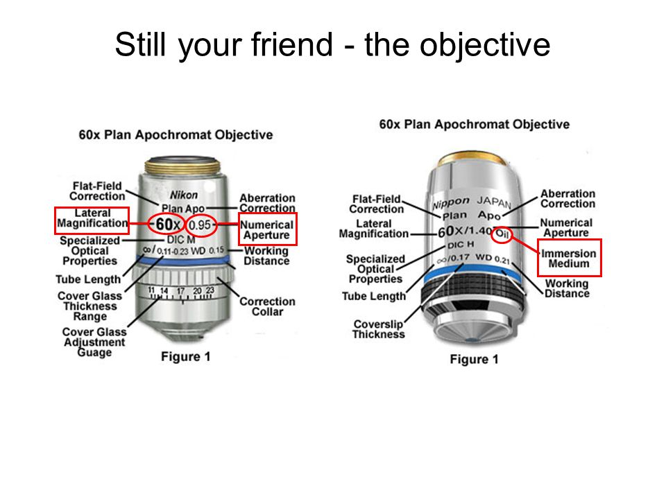 Still your friend - the objective