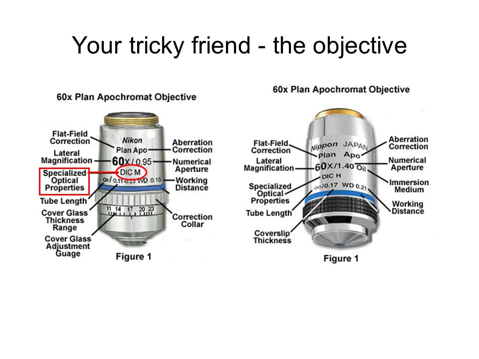 Your tricky friend - the objective