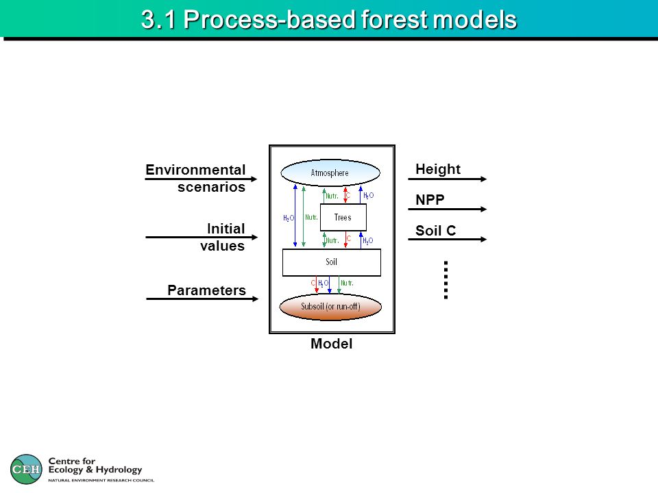 3.1 Process-based forest models