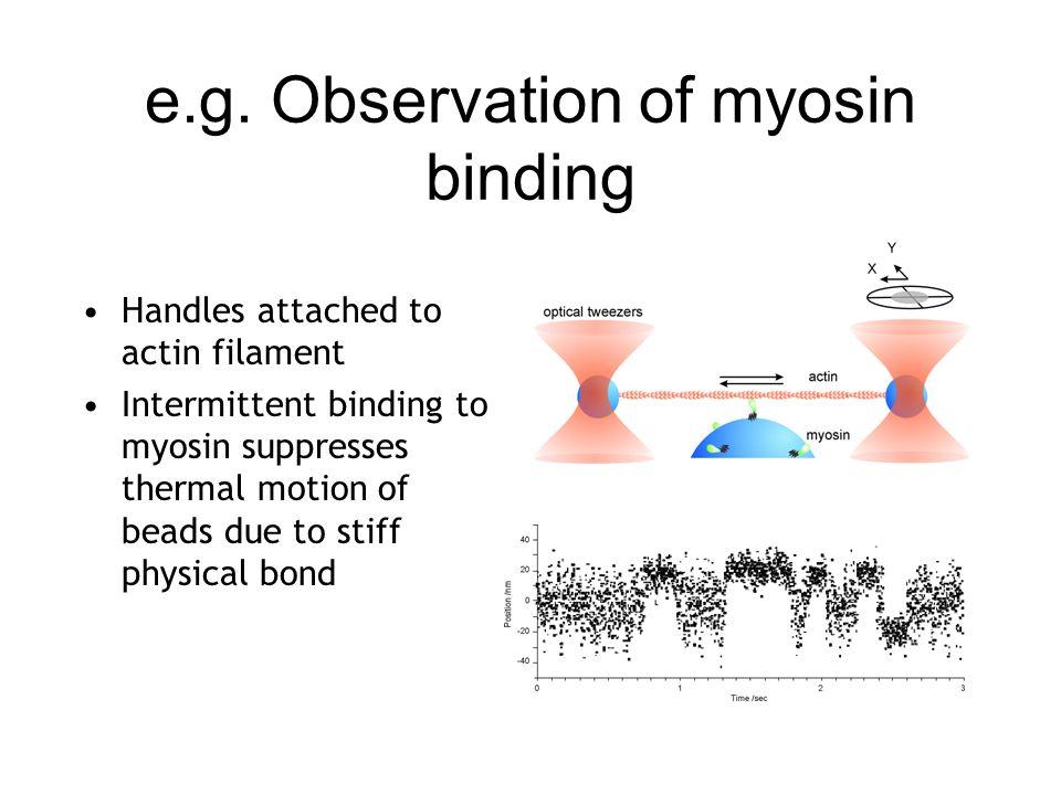 e.g. Observation of myosin binding