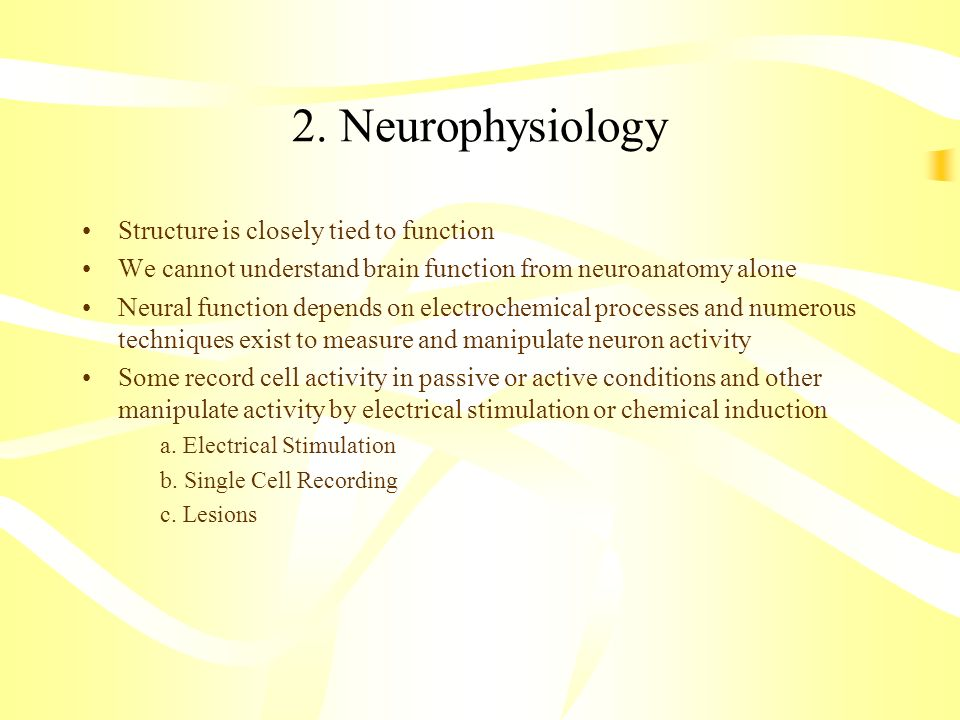 2. Neurophysiology Structure is closely tied to function