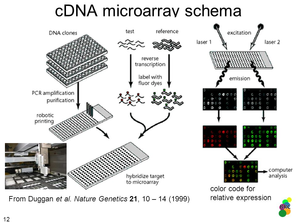cDNA microarray schema