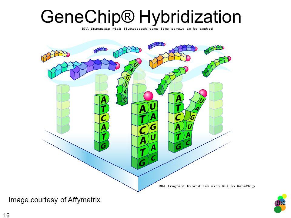 GeneChip® Hybridization