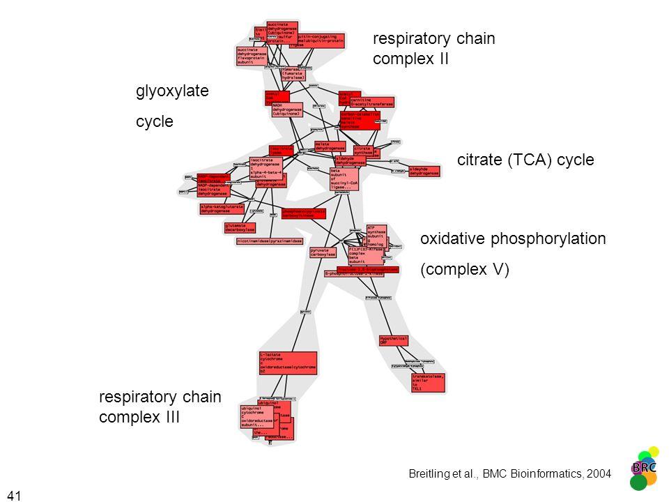 oxidative phosphorylation (complex V)