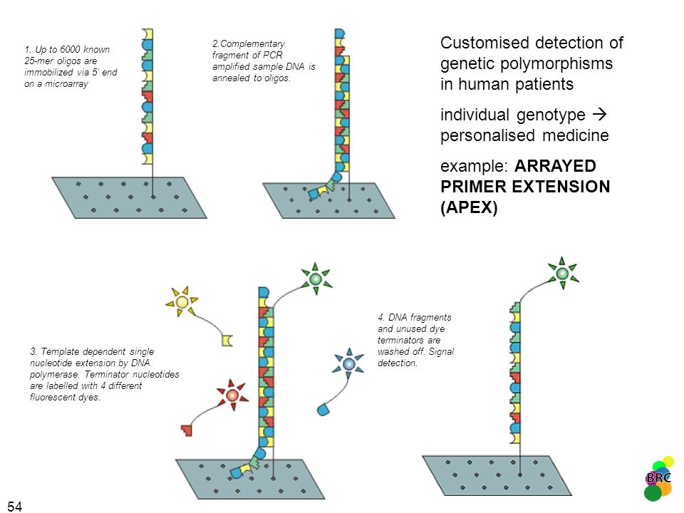 Customised detection of genetic polymorphisms in human patients
