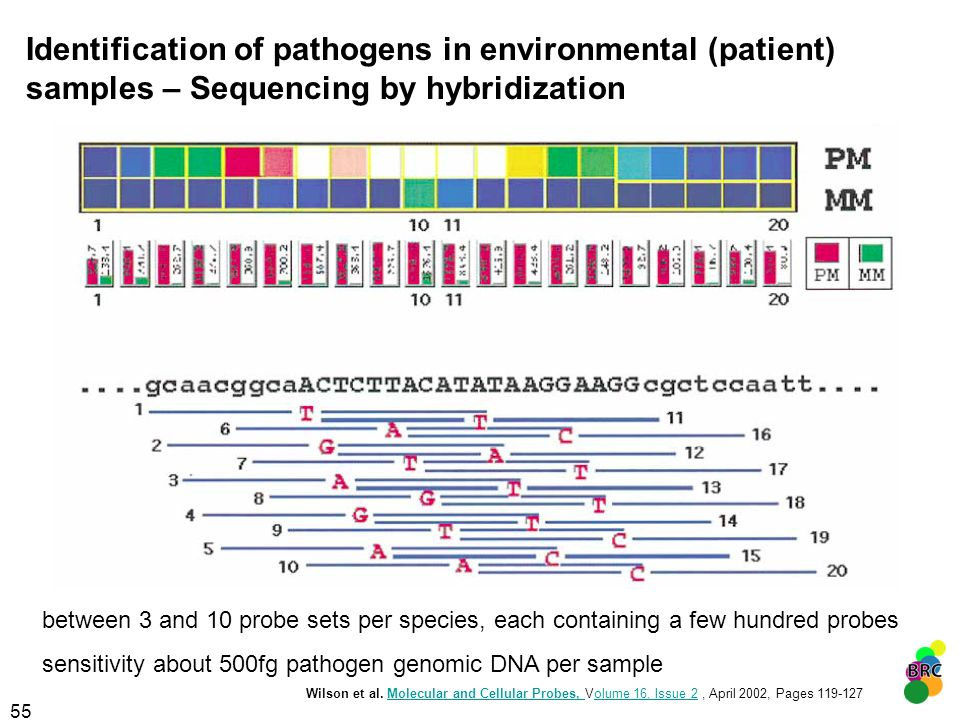 Identification of pathogens in environmental (patient) samples – Sequencing by hybridization