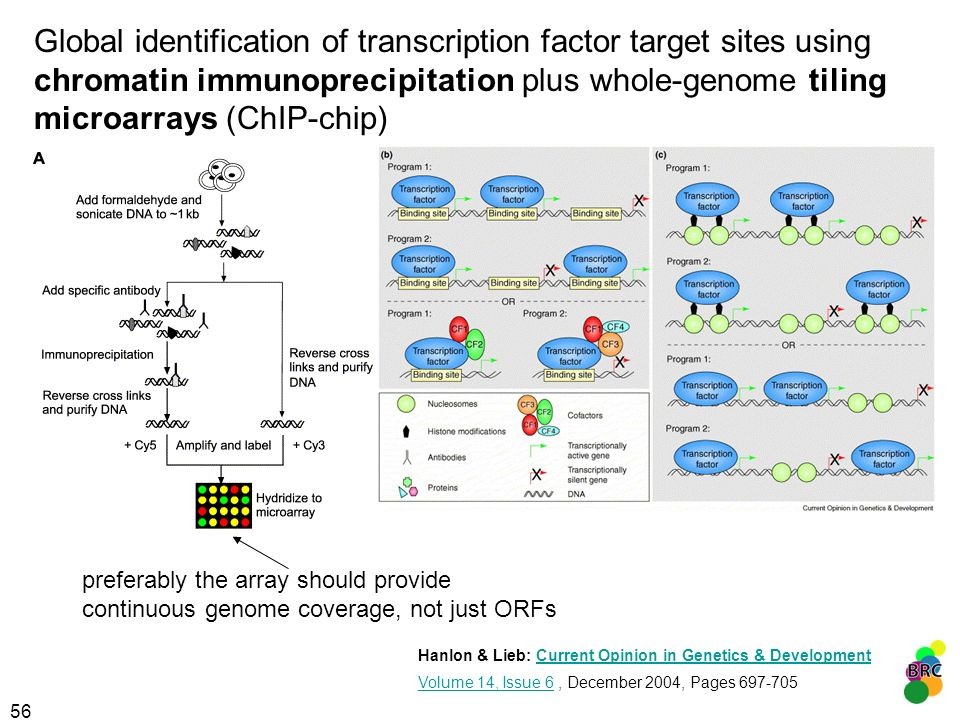 Global identification of transcription factor target sites using chromatin immunoprecipitation plus whole-genome tiling microarrays (ChIP-chip)