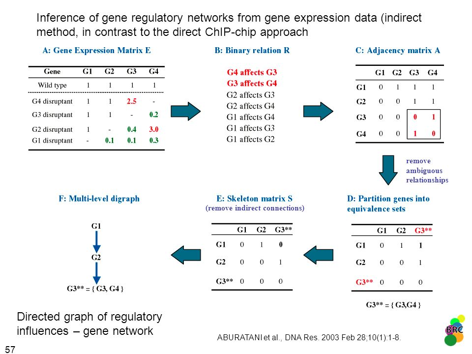 Directed graph of regulatory influences – gene network