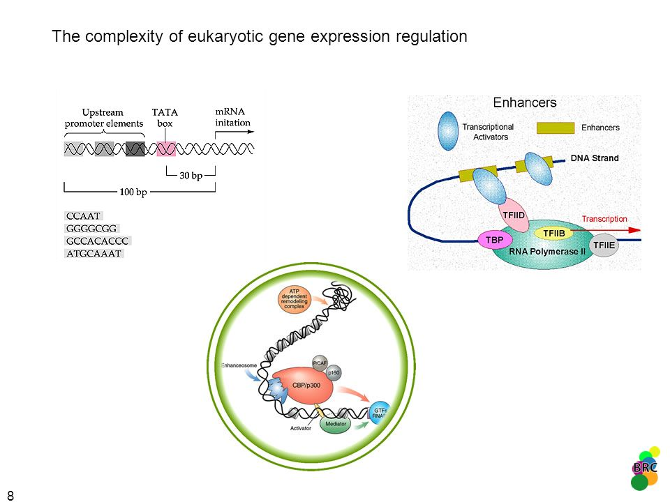 The complexity of eukaryotic gene expression regulation