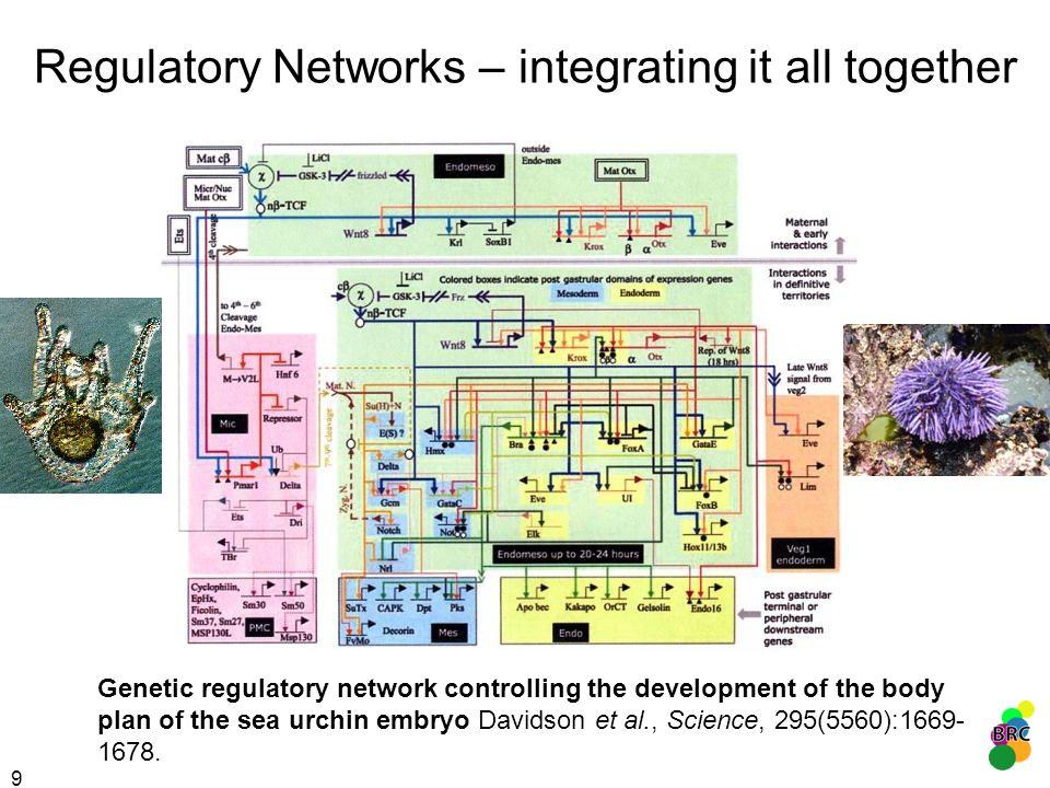 Regulatory Networks – integrating it all together