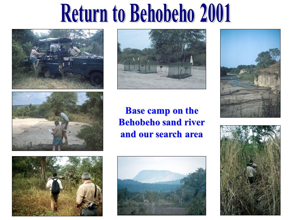 Return to Behobeho 2001 Base camp on the Behobeho sand river