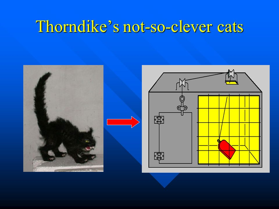 Thorndike's not-so-clever cats