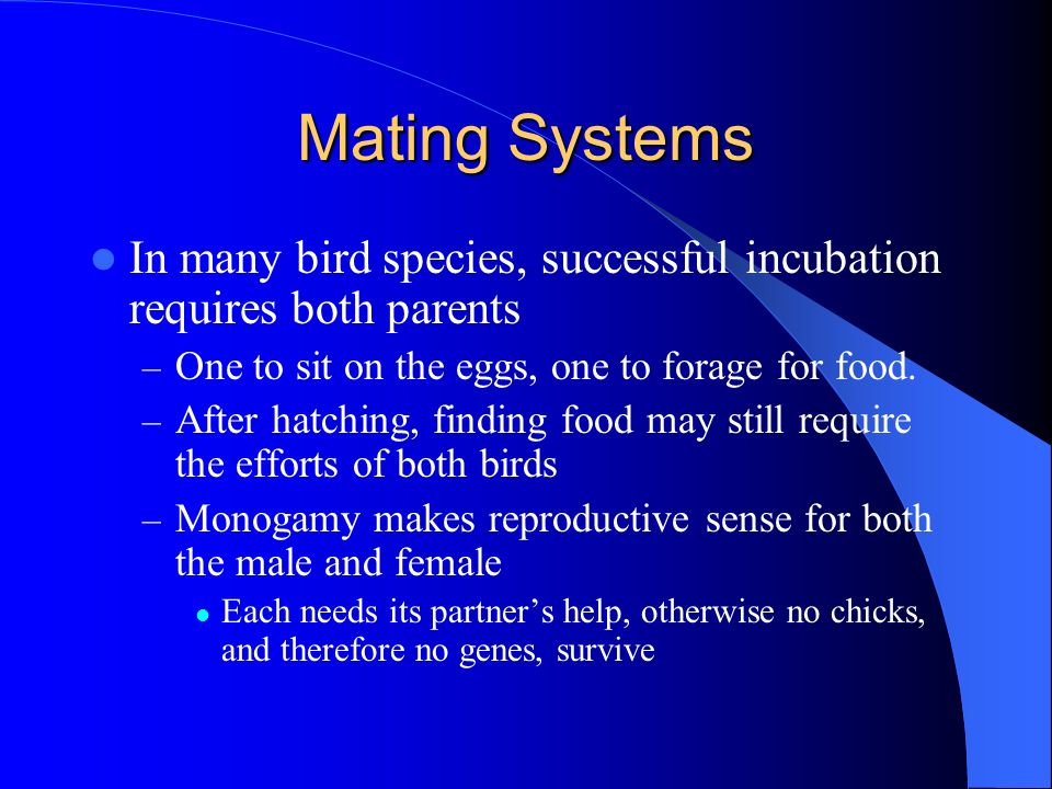 Mating Systems In many bird species, successful incubation requires both parents. One to sit on the eggs, one to forage for food.