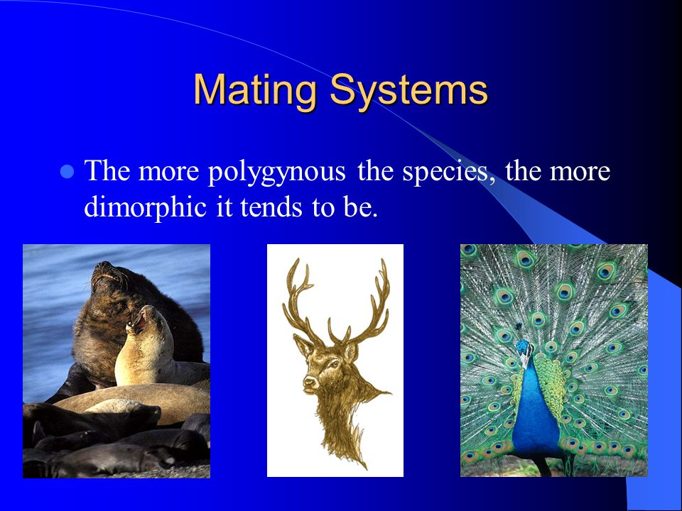 Mating Systems The more polygynous the species, the more dimorphic it tends to be.